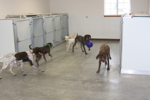 Puppy Day Care 2