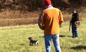 Arley from our 2014 litter pointing a chukar at 10 weeks.