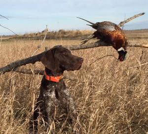 Rebel with Pheasant
