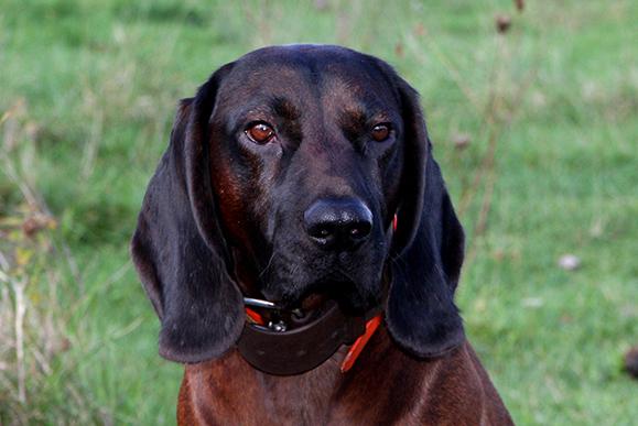 Blue Dog Training Madison Wi